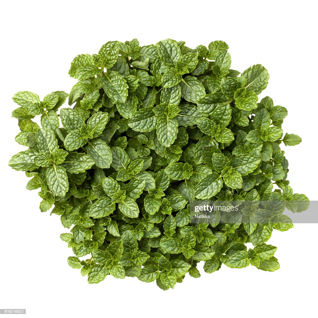 Fresh mint herb leaves isolated on white background cutout : Stock Photo