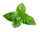 Fresh mint in closeup on a white background