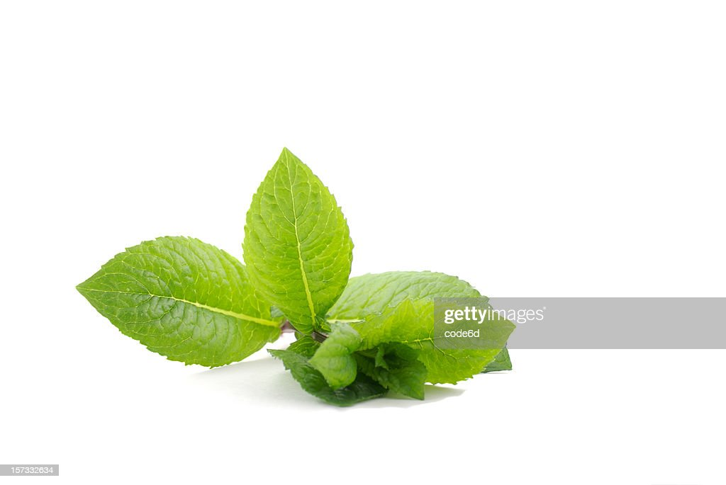 Fresh mint, isolated on white background, cocktail ingredient : Stock Photo