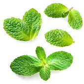 Fresh mint leaves isolated on white background. Collection