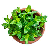 Fresh mint plant growing  in a flowerpot, isolated on white background, top view. Fresh mint - ingredient for cooking'n