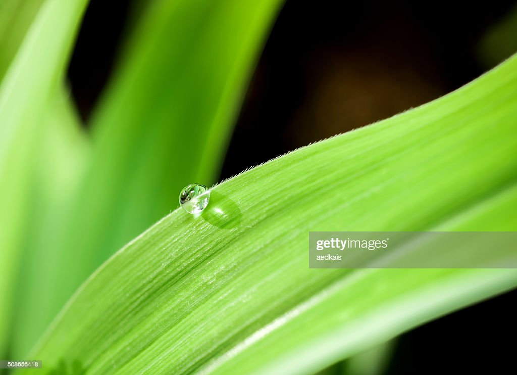 fresh morning dew on spring grass : Stock Photo