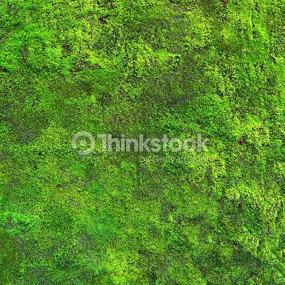 mousse de prime fra cheur qui poussent sur le mur photo thinkstock. Black Bedroom Furniture Sets. Home Design Ideas