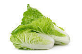 fresh napa cabbage on white background