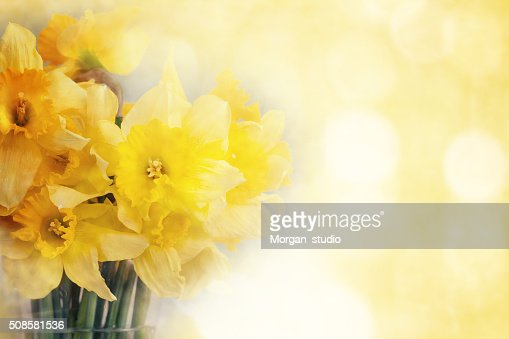 Fresh narcissus, greeting card for mothers day, 8 March, Valenti : Stockfoto