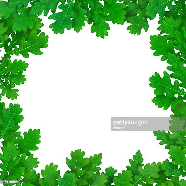 Fresh Oak Leaves On White Background
