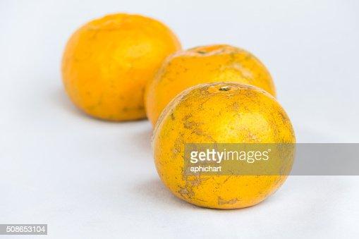 fresh orange clean fruit : Stock Photo
