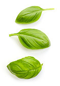fresh organic basil leaves isolated on white background