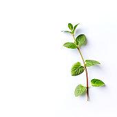 Fresh organic Mint Leaves on White Background; flat lay