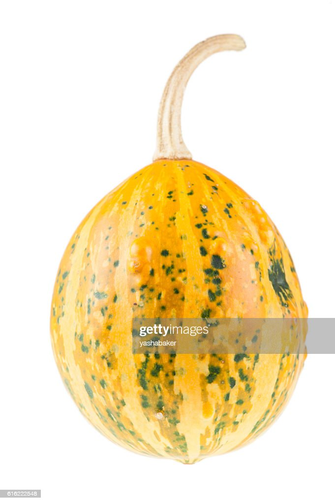 Fresh organic yellow decorative pumpkin : ストックフォト