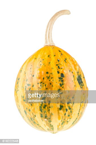Fresh organic yellow decorative pumpkin : ストックフォト