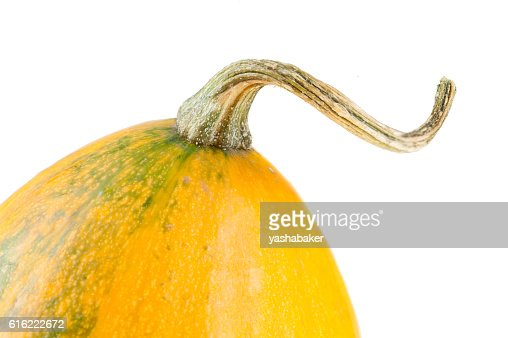 Fresh organic yellow decorative pumpkin : Bildbanksbilder