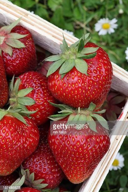 strawberrys in einem Korb