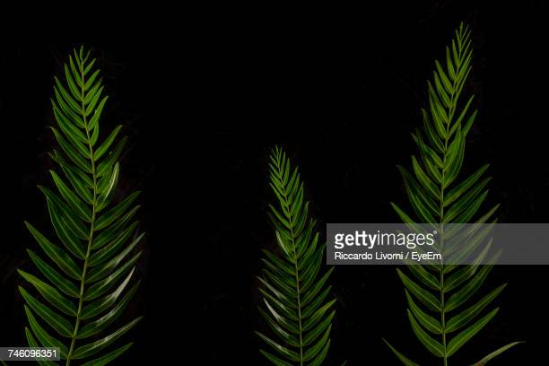 Fresh Plants Against Black Background