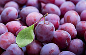 close up of fresh plums as background