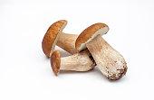 Fresh porcini mushrooms isolated on withe Background Nature forest mushrooms Season