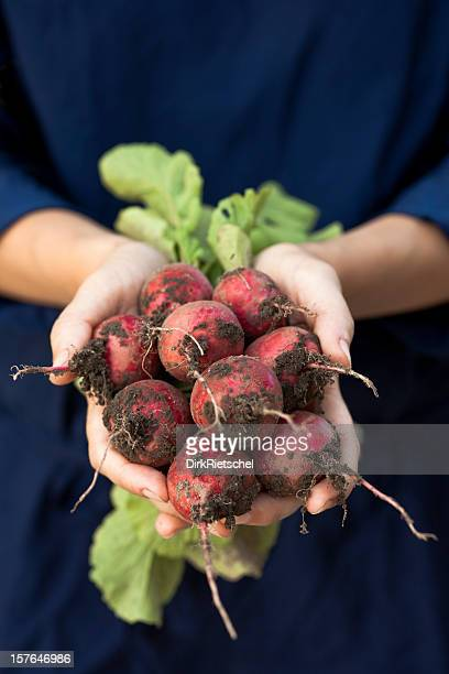 Fresh Radishes with roots.