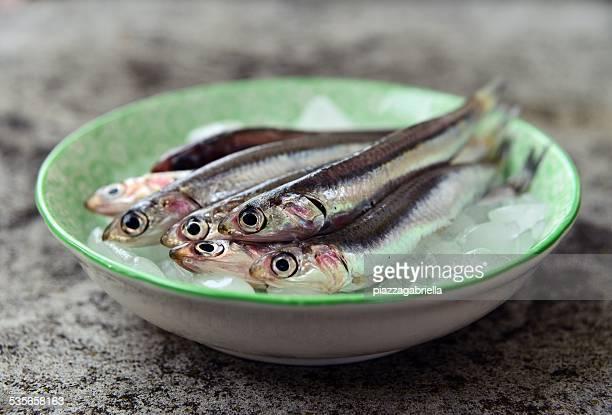 Fresh raw european anchovies on ice