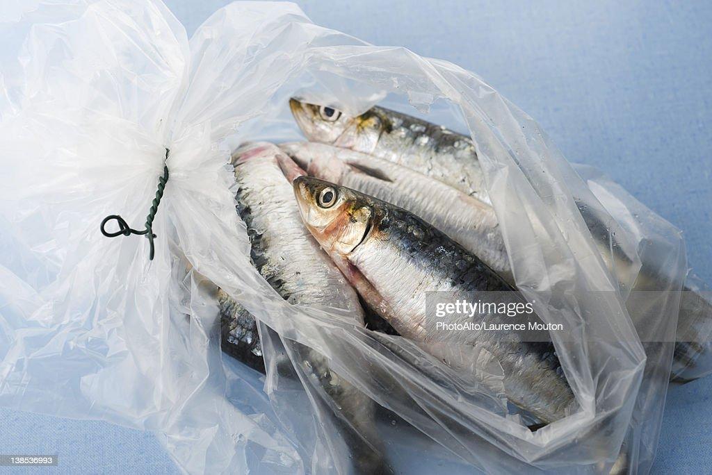 Fresh raw sardines in plastic bag : Stock Photo