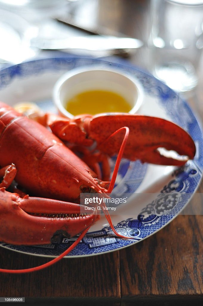 Fresh red Nova Scotia lobster