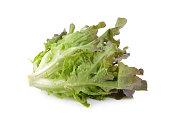 fresh red oak lettuce on white background