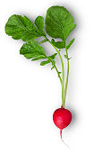 Fresh red radish with leaf isolated on white background. Clipping Path. Full depth of field.