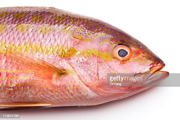 how to clean snapper fish