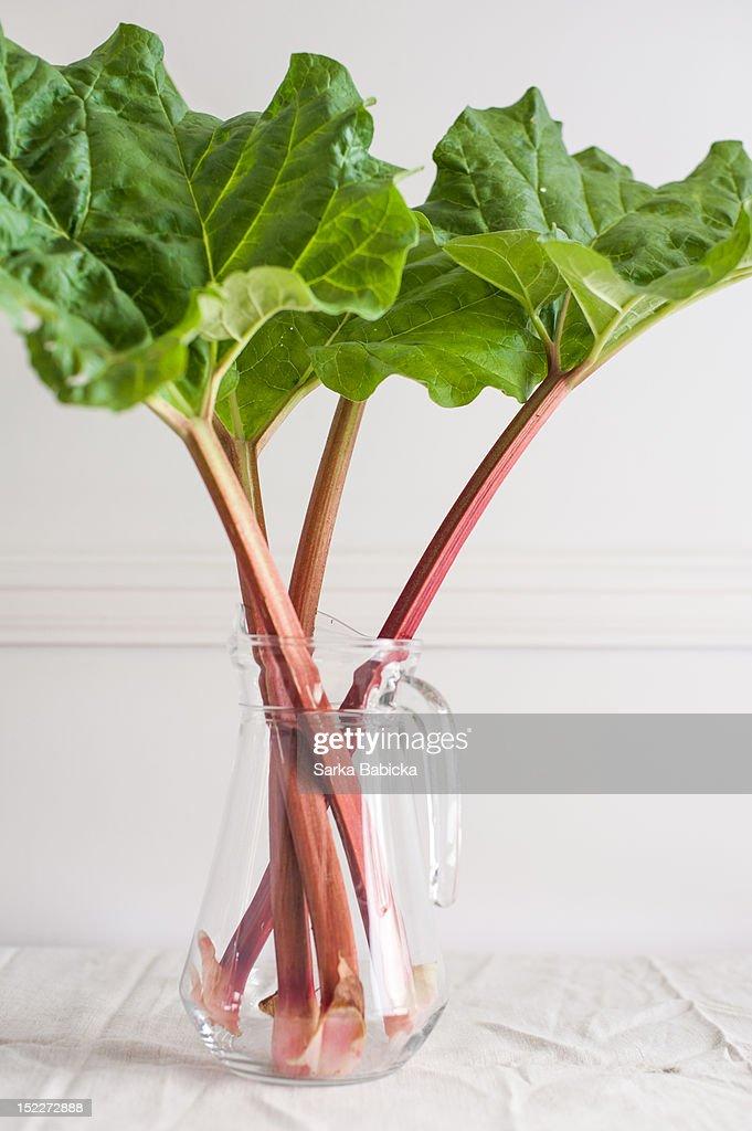 Fresh rhubarb in vase : Stock Photo
