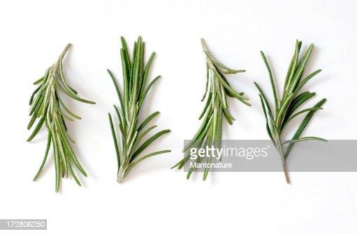 Frescas de rosmaninho (Rosmarinus officinalis) em branco