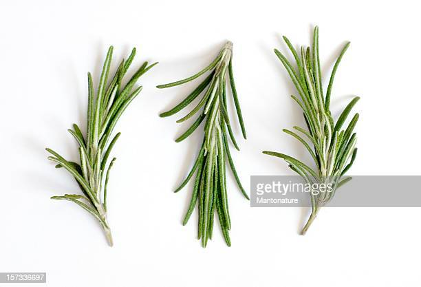 Fresh rosemary sprigs or Rosmarinus officinalis on white