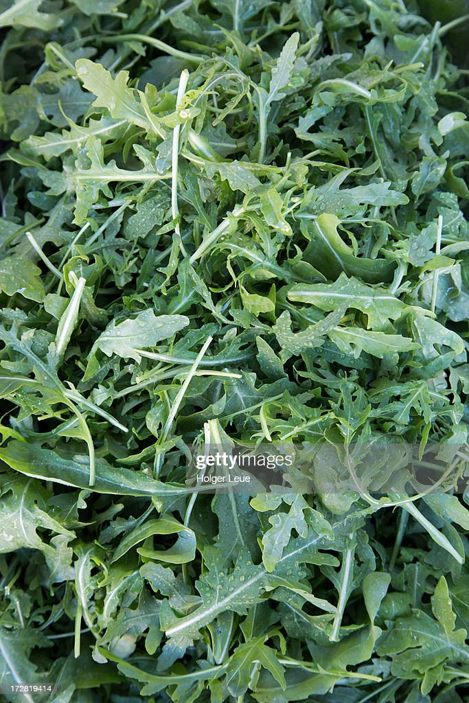 Fresh rucola salad leaves for sale at market