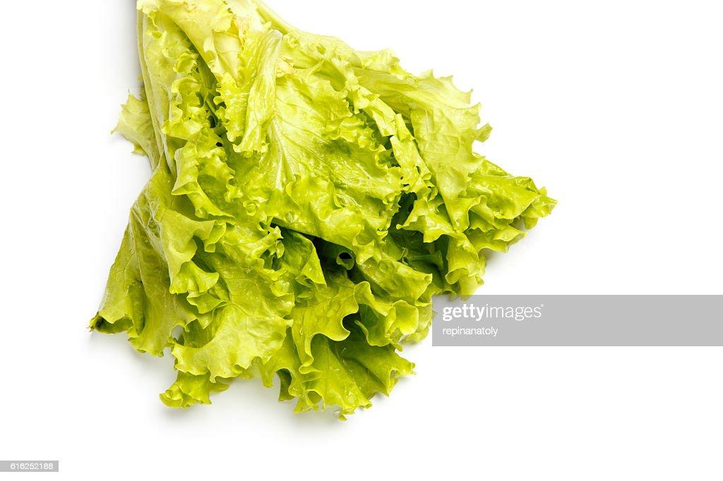 Fresh salad lettuce isolated on white : Stock Photo