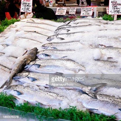 Fresh Salmon fish sale - III