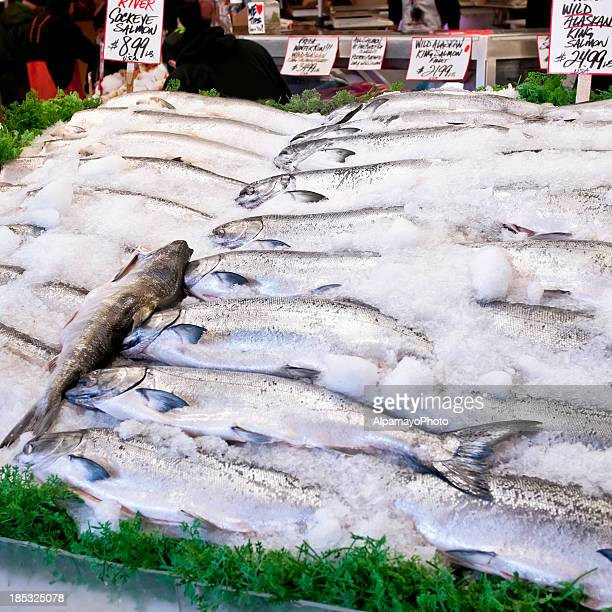 Fresh Salmon fish sale - III
