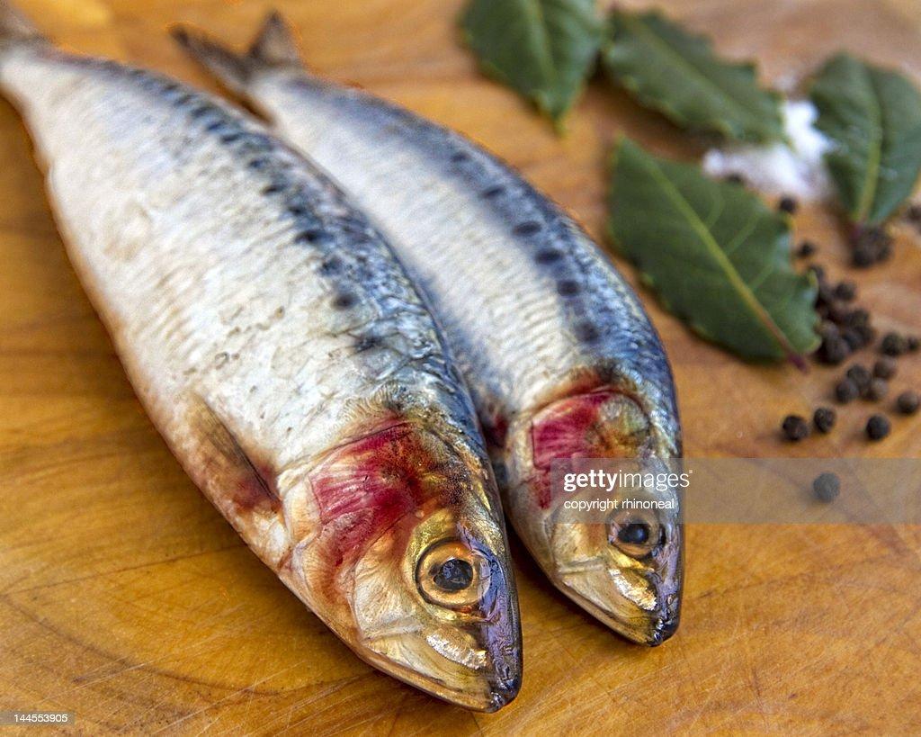 Fresh sardines : Stock Photo