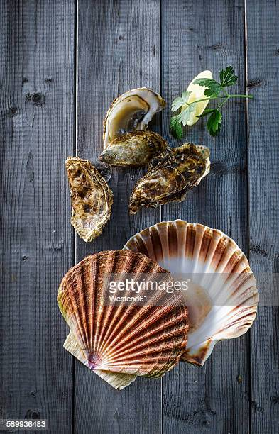 Fresh scallop, oyster, lemon and parsley on wood