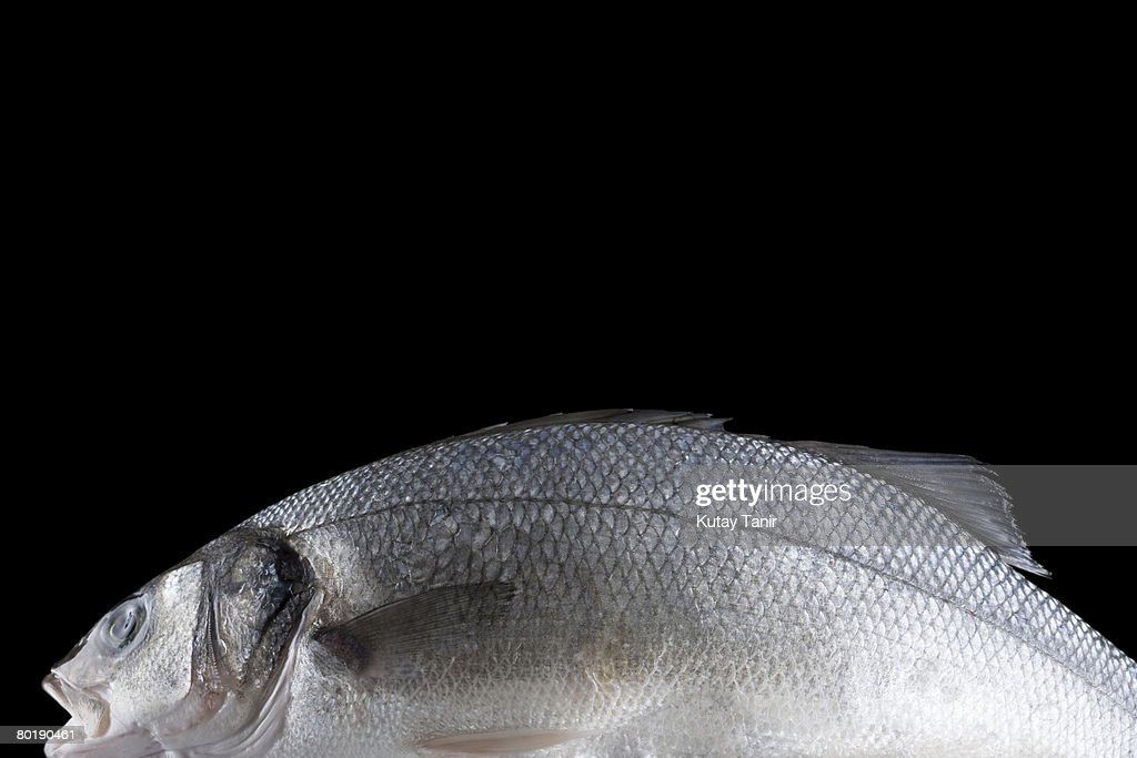Fresh Sea Bass on black background : Stock Photo