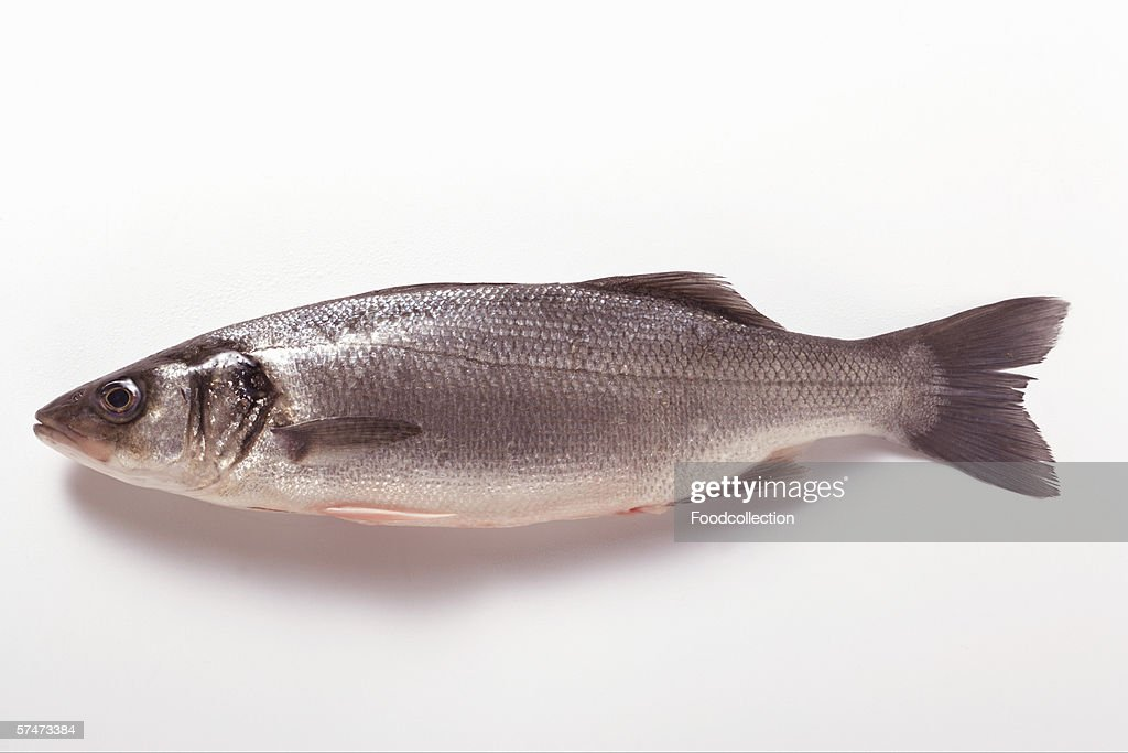 Fresh sea bass : Stock Photo