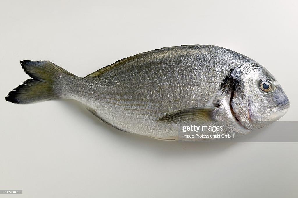 Fresh sea bream : Stock Photo