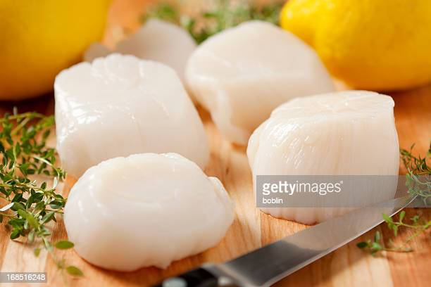 Fresh sea scallops with knife and lemon