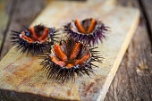 Fresh sea urchins from south of Italy, Puglia region