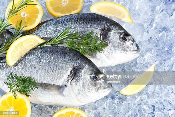 Fresco seafish