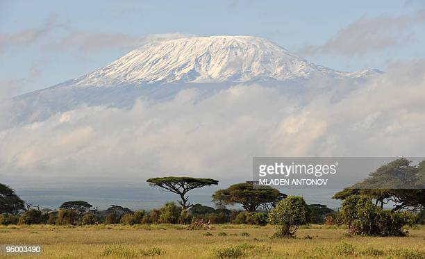 Fresh snow covered Mount Kilimanjaro seen at sunrise from Ambuseli game reserve in Kenya May 04 2008 AFP PHOTO / MLADEN ANTONOV