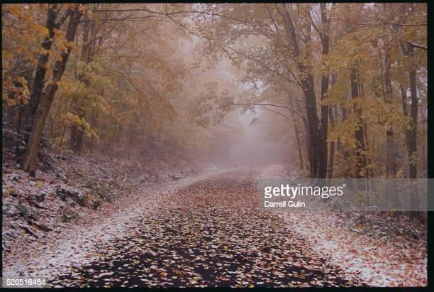 Fresh Snow on a Rural Road