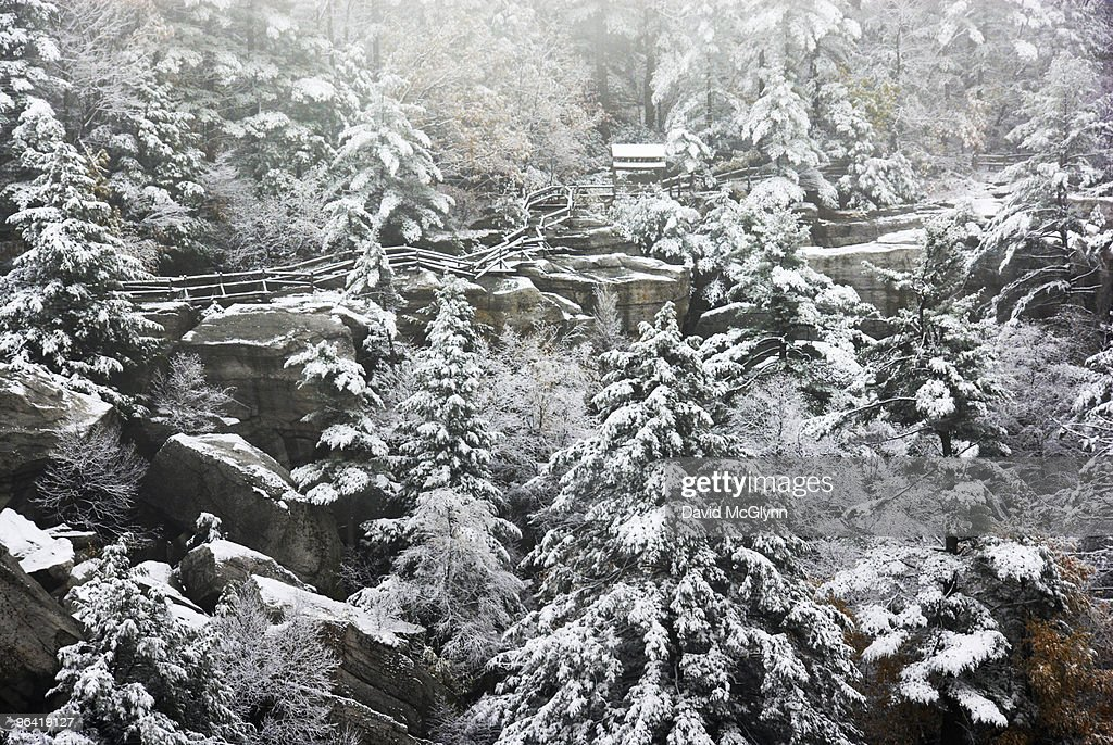Fresh snowfall on hillside : Stock Photo