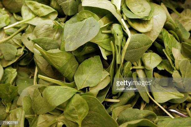Fresh spinach leaves are seen in the produce section of United Market September 15 2006 in San Rafael California The source of an E coli outbreak...
