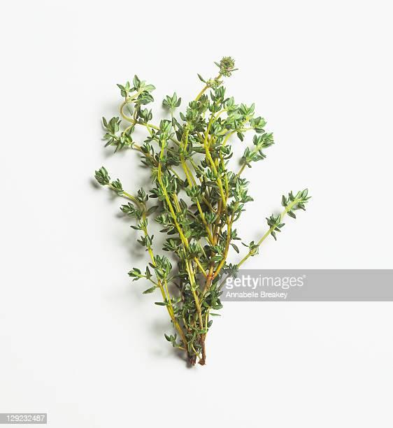 Fresh Sprigs of Thyme Herb