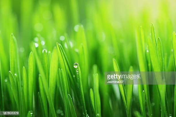 Fresh spring grass background