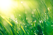 Fresh spring grass with raindrops
