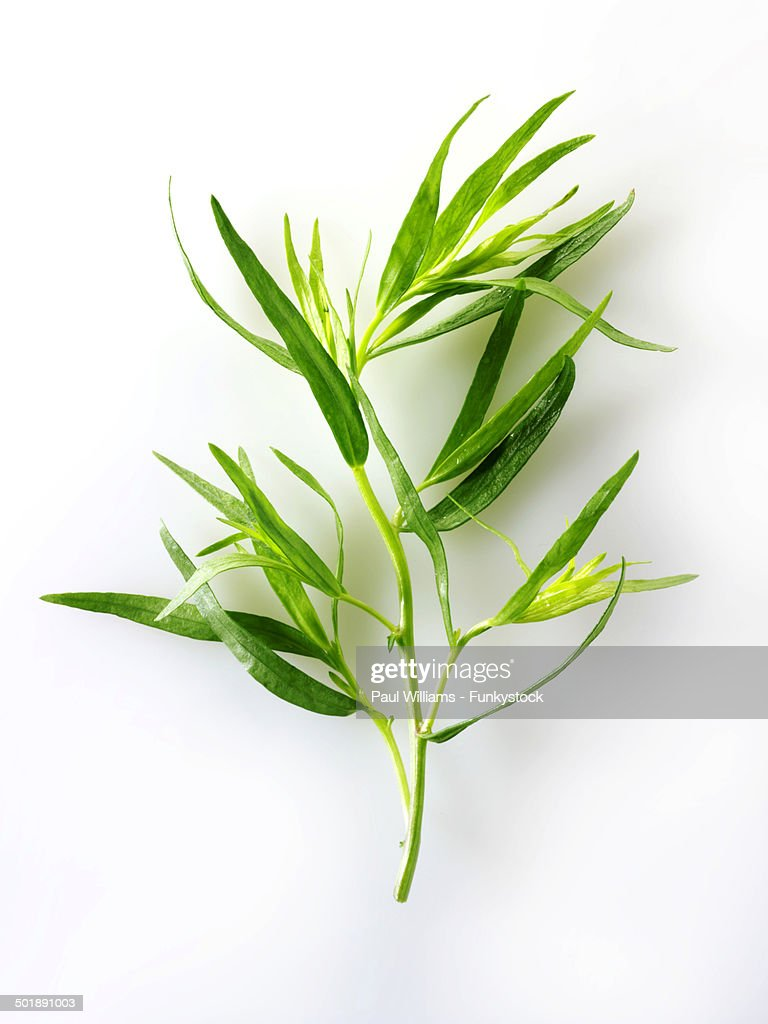 Fresh Tarragon leaves